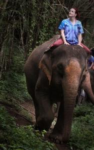 Enhanced Elephants-11
