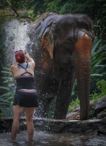 Enhanced Elephants-13