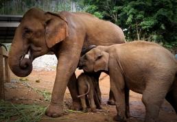 Enhanced Elephants-3