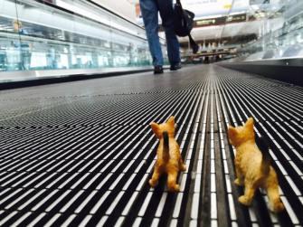 11986919_10152661164247465_6458534962900591949_n-cats-on-moving-sidewalk
