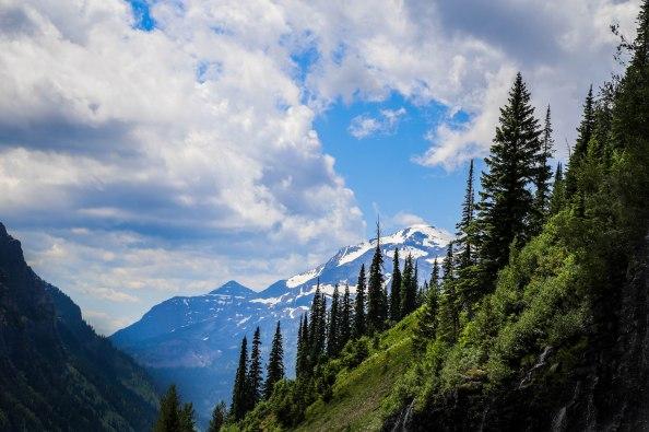 Glacier Trees 23